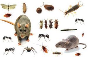 مكافحة حشرات بالخبر بالظهران بالقطيف